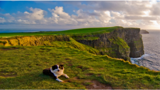 Cliffs of Moher Dog